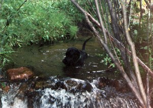 0 dog bailey in creek